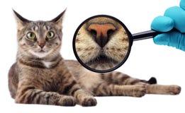 Cat Expert Wij onderzoeken kat Stock Afbeeldingen