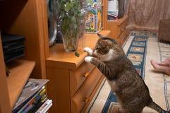Cat - explorer. Curious cat - explore chrysanthemum leaf Royalty Free Stock Images