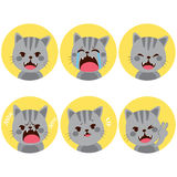 Cat Expressions. Little pet cute grey cat facial expressions on flat color style vector illustration