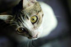 Cat Extreme Close Up Imagen de archivo libre de regalías