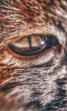 Cat Eye foto de archivo libre de regalías