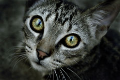 Cat eye Royalty Free Stock Photography
