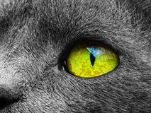 Cat Eye stockfotografie