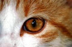 Cat eye. Cat royalty free stock photo