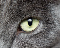 Free Cat Eye Royalty Free Stock Image - 20694716