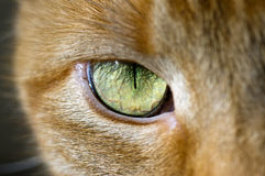Cat eye. Close up of a cat eye Royalty Free Stock Image