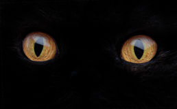 Cat Eye Stock Photos