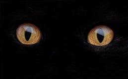 Cat Eye Stock Photos