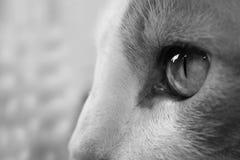Cat Eye Immagine Stock Libera da Diritti