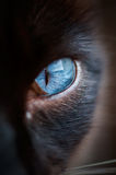 Cat Eye Royaltyfri Bild