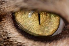 Cat Eye Photographie stock libre de droits