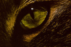 Cat Eye 013 Stockfoto