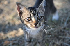 Cat Eye Fotografie Stock