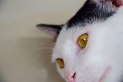 Cat Eye Royaltyfria Bilder