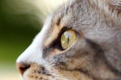 Cat Eye Arkivbilder