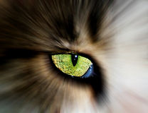 Cat eye. Abstract close-up of green eye of cat Royalty Free Stock Photography