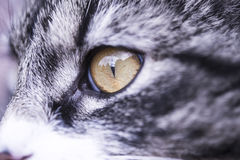 Cat Eye Fotos de Stock Royalty Free