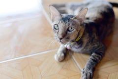 Cat Eye image libre de droits