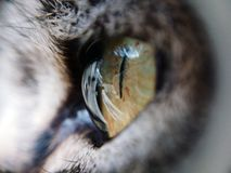 Cat Eye photographie stock libre de droits
