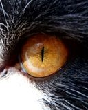 Cat Eye photos stock