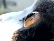 Cat Eye photo stock
