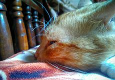 Cat Eye Imagen de archivo libre de regalías