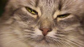 Cat Eye banque de vidéos