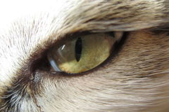 Cat Eye Stock Foto
