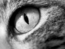 Cat Eye - Close-Up. Detail of a Calico Cat's Eye royalty free stock photography