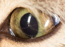 Cat eye. close-up. In the park in nature Stock Photo