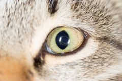 Cat eye. close-up. Photos in the studio Stock Image