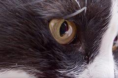 Cat eye  close-up closeup Royalty Free Stock Images