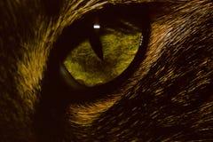 Cat Eye 013. Close up of a green cat eye Stock Photo