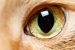 Cat eye close up. One eye red cat close-up photo illustration Stock Photos