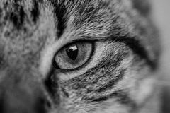 Cat eye Royalty Free Stock Photos
