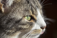 Cat eye Stock Images