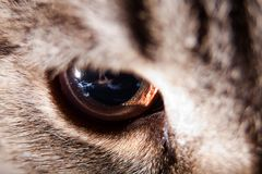 Cat eye closeup Royalty Free Stock Image