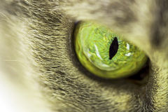 Cat eye Stock Image