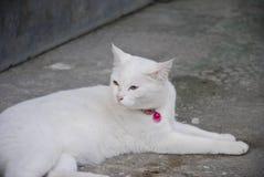 Cat Eye Color Yellow et bleu blancs Images libres de droits