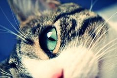 Cat eye detail Stock Photography