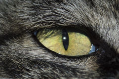Cat eye. Details of a yellow cat eye Royalty Free Stock Photography