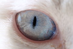 Cat eye with great detail Royalty Free Stock Photos
