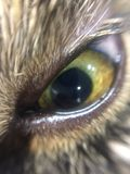 Cat eye green wise angry soul third eye hazel green almond shape Royalty Free Stock Photo