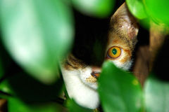 The cat eye After leaves Royalty Free Stock Image