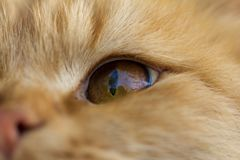 Cat Eye Makro Lizenzfreies Stockfoto