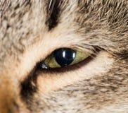 Cat Eye Nahaufnahme Lizenzfreies Stockfoto