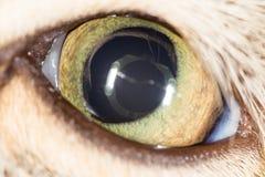 Cat Eye Nahaufnahme Stockbilder