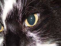 Cat Eye's. Close up shot of cat royalty free stock images