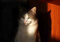 Cat eye in sunlight Royalty Free Stock Photography