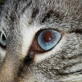 Cat Eye. This is Sunshine bright blue eye Stock Photo